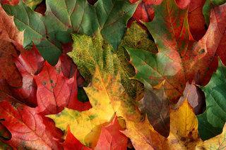 Autumn(オータム)タイプとは